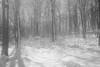 neve di primavera (rino_savastano) Tags: neve sole alberi