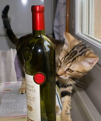 2013.08.26_0035_dommage il n'y en a plus (mageroya) Tags: chat vin bouteille
