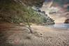 (150/18) Pinos junto al mar (Pablo Arias) Tags: pabloarias photoshop photomatix capturenxd españa cielo nubes playa arena mar agua mediterráneo pino calamacarella menorca