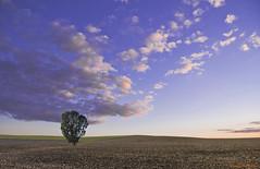 Serena soledad (ricardocarmonafdez) Tags: paisaje atardecer sunset arbol tree cielo sky nubes clouds blue campo field minimalist 60d 1785isusm canon