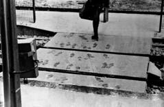 autre gare, même train (hugobny) Tags: fuji superia 200 caffenol c41 processed black white cl semistand zenit ttl 58mm helios 44m f2 argentique analogue analog analogique obernai street gare train station film