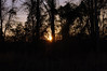Wooded Silhouette. (dccradio) Tags: lumberton nc northcarolina robesoncounty outside outdoors evening lateafternoon dusk sky bluesky colorfulsky eveningsky tree trees treelimbs treebranches woods wooded forest backyard branches branch sticks nature natural nikon d40 dslr sunset settingsun