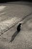 猫 (23fumi@fuyunofumi) Tags: ilce7rm3 sony 85mm sel85f18 fe85mmf18 cat neko katze gato animal shadow monochrome miyazaki bw a7r3 ねこ 猫 ソニー 影 モノクロ