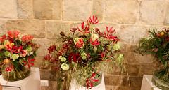Temps de flors_0249 (Joanbrebo) Tags: girona catalunya españa es tempsdeflors tempsdeflors2017 canoneos80d eosd efs1018mmf4556isstm autofocus flors flores flowers fleur fiori