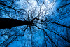 Neural Network (hlatun04) Tags: darkness trees springbreak twilight wideangle tokina nikond7100 arkansas ozarknationalforest nationalforest sky blue