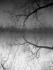 reflection (Darek Drapala) Tags: reflection reflects trees tree water bw blackwhite blackandwhite nature panasonic poland polska panasonicg5 lumix light skaryszewski silhouette silkypix silence winter