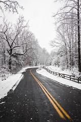 (adamwilliams4405) Tags: winter snow snowday snowy nature virginia visitrichmond visitvirginia loveva scenic landscapes canon va explore richmond rva richmondva tones trees icy outside