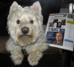"3/12B ~ Riley says ""I'm in Again!"" (ellenc995) Tags: riley westie westhighlandwhiteterrier 12monthsfordogs18 bizx magazine thegalaxy supershot challengeclub 100commentgroup"