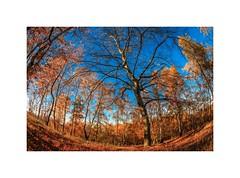 Ungewöhnliche Sicht auf den Herbst (linke64) Tags: thüringen natur deutschland blätter landschaft laub wald bäume baum bunte herbst himmel rahmen jahreszeiten superweitwinkel