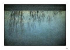 Un frío reflejo (V- strom) Tags: concepto concept agua water árbol tree reflejos highlights frío cold azul blue luz light vstrom nikon nikon2470 nikond700 texturas textures paisajes landscape