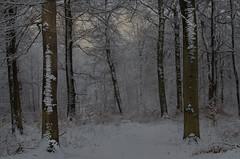 Winter in the nature reserve (frankmh) Tags: snow tree naturereserve hittarp helsingborg skåne sweden outdoor forest