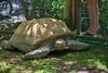 Giant Turtle (Scott 97006) Tags: turtle zoo huge large old big giant