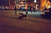 george's dog run, washington square park (Charley Lhasa) Tags: ricohgrii grii 183mm 28mm35mmequivalent iso25600 ¹⁄₅₀secatf28 0ev aperturepriority pattern noflash s000215 dng cropped taken180304184812 uploaded180307012017 1stars flagged adobelightroomclassiccc72 lightroomclassiccc72 adobelightroom lightroom bigdogrun dogrun georgesdogrun greenwichvillage washingtonsquarepark newyork unitedstates us charley charleylhasa lhasaapso dog night dogs washingtonsquareparkdogrun wsp nycparks citypark urbanpark manhattan newyorkcity nyc ny tumblr180307 httpstmblrcozpjiby2vsfma6
