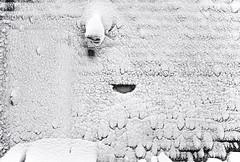 No Door... - Tenants Harbor Maine (Jonmikel & Kat-YSNP) Tags: maine tenantsharbor me stgeorge oldwoodsfarm farmhouse stgeorgepeninsula midcoastmaine noreaster winter snow wetsnow march backyard woods field barn