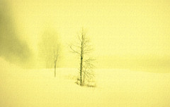 Yellow (LupaImages) Tags: trees winter meadow field rural snow storm bare cold nature weather outside outdoors febuary