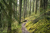 Into the Wilderness (gwendolyn.allsop) Tags: trail path moss mossy green forest trees pnw outdoors wilderness opal creek oregon d5200