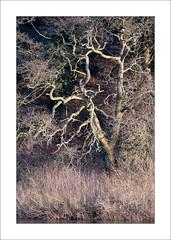 River Trent (Steve-T201) Tags: rivertrent nottinghamshire trees colours