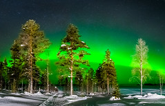 a few more trees with northern lights (juhwie.foto - PROJECT: LEIDENSCHAFT-LICH-T) Tags: trees aurora northern lights finland finnland finlandia scandinavia green snow frost winter lake nature miracle sky stars pentax pentaxart ricohimaging k1 landscapephotography nightscape nightshoot ngc