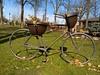 WP_20180309_13_26_22_Raw (vale 83) Tags: bicycle decoration public garden pančevo serbia microsoft lumia 550 friends coloursplosion colourartaward