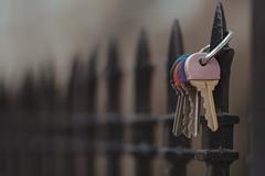 Lost Keys (Jovan Jimenez) Tags: sony a6500 nikon series e 28mm fujifilm superior 200 6500 ilce seriese eseries f28 close up luts film fulicolor fuji bokehlicious manual lens manuallens vintagelens oldlens retrolens adaptedlens adaptedlenses ais classiclens classiclenses