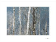 Resilience (E. Pardo) Tags: resilience bäume trees árboles bosque wald forest woods troncos baumstämme formas formen forms