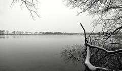 snowy watertree (HansHolt) Tags: tree fallen boom gevallen lake meer zandwinplas water winter landscape landschap snow sneeuw reed riet trees bomen sandmining zandwinning reflection reflectie weerspiegeling nijstad hoogeveen drenthe netherlands canon 6d canoneos6d canonef24105mmf4lisusm
