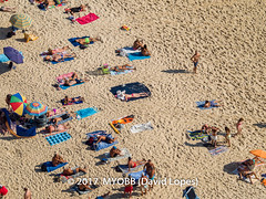 Portugal 2017-9021079-2 (myobb (David Lopes)) Tags: 2017 adobestock allrightsreserved atlanticocean europe nazare portugal aerialview beach beachumbrella copyrighted day daylight enjoyment highangleview leisureactivity outdoors sand sunbathing tourism touristattraction traveldestination umbrella vacation ©2017davidlopes