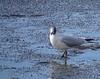 Hello !!! (Yset1) Tags: oiseau eau mouette