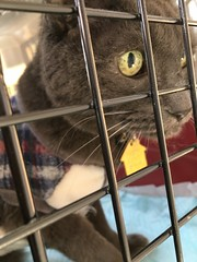 At the Vet for His Weekly Treatment (sjrankin) Tags: 24march2018 edited animal cat bonkers closeup carrier catcage catcarrier kitahiroshima hokkaido japan