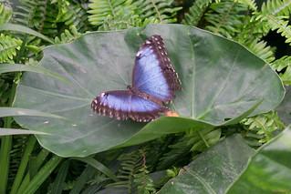 Papillons en fête, Québec, Canada - 5056