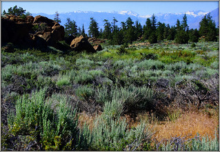 GROUND COVER (VEGETATION) AND THE EASTERN SIERRAS
