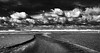 Back to life (mare photo) Tags: backtolife marephoto texel bw blackwhite schwarzweis neroametà
