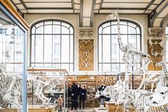 museum-histoire-naturelle-mars-2018-photo-quentin-chevrier-10 (quentin chevrier) Tags: paris museum histoire naturelle museumhistoirenaturelle fossile musée squelette dinosaure