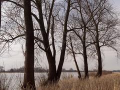 Am Rhein zwischen Monheim + Baumberg (KL57Foto) Tags: 2018 baumberg fluss germany gewässer jahreszeitenundwetter kl57foto landschaften march monheimbaumberg märz nrw natur nordrheinwestfalen olympus penemp2 rhein rhine river winter