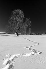zigzags of spring (Sergey S Ponomarev -very busy) Tags: sergeysponomarev canon eos 70d ef24105mmf40lisusm nature village rural country russia russie russland north nord march marzo spring winter snow neve tree house buildings izba morning bw blackandwhite monochrome 2018 landscape paysage paesaggio landschaft path track footsteps texture light сергейпономарев природа деревня утро снег март весна зима холод север россия киров вятка высоково изба пейзаж следы свет текстура