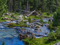 Deja que busque en el agua (Jesus_l) Tags: europa españa lleida aigüestortes parque nacional agua bosque jesúsl