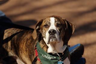 Dog Days '18, Morton Arboretum. 2 (EOS)