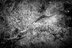 67. Tree in monochrome (Small and Beautiful) Tags: beautiful monochrome frame light smallandbeautiful
