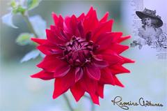 Julga-se que a necessidade cria a coisa (Ramiro Antunes) Tags: flor arte digital verde vermelho natureza dália água macro cores vivas