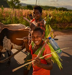 Dareshe Boys (Rod Waddington) Tags: africa african afrique afrika äthiopien ethiopia ethiopian ethnic etiopia ethnicity ethiopie etiopian dareshe traditional tribe tribal boys culture cultural children cattle road crop outdoor people landscape