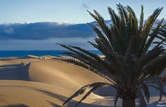 Duneando por Maspalomas... (Leo ☮) Tags: dunas dunes palmera palmtree mar sea cielo sky blue azul marzo march luz light color cloud nube maspalomas playadelinglés grancanaria islascanarias
