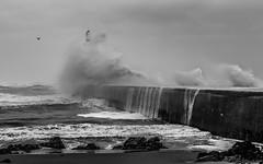 southpier Aberdeen 2 (Rudy van der vos) Tags: southpier aberdeen aberdeenshire sea pier water harbour scotland waves wave blackwhite