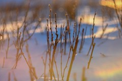 Snow and sun. (agnieszka.a.morawska) Tags: oldlens sunny sun beyondbokeh bokeh bokehlicious bkhq snow helios44m helios44 helios winter