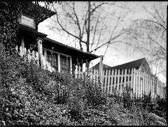 looking up, white picket fence, residence, hillside, backlit, North Asheville, NC, Mamiya 645 Pro, mamiya sekor 80mm F-2.8, 3.20.18 (steve aimone) Tags: lookingup whitepicketfence residences hillside backlit northasheville asheville northcarolina mamiya645pro mamiyasekor80mmf28 mamiyaprime primelens ilfordfp4 ilfordilfosol3developer 120 film 120film mediumformat monochrome monochromatic blackandwhite landscape