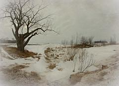 Landscape (Dave Linscheid) Tags: tree sky texture country rural stream creek picmonkey snow winter spring watonwancounty mn minnesota usa 8mmrokinonlens fisheye