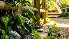 Park (Vitorlandophotographs) Tags: parc nature lovenature wildnature wild city citypark stairs sunnyday sun bari apulia puglia