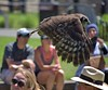Trained Owl (Scott 97006) Tags: zoo bird owl flying audience performance