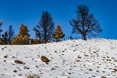 Custer Park 20180223-0037 (Photos By Bob Van) Tags: blackhills csp custerstatepark landscape snow southdakota winter fairburn unitedstates us