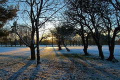 Winter sunlight (Eddie Crutchley) Tags: europe england cheshire outdoor nature beauty blueskies sunlight shadows silhouettes sunset simplysuperb winter snow
