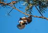 Invading Privacy (Kafoor Sammil) Tags: redwhiskeredbulbul kerala munnar munnarbirds
